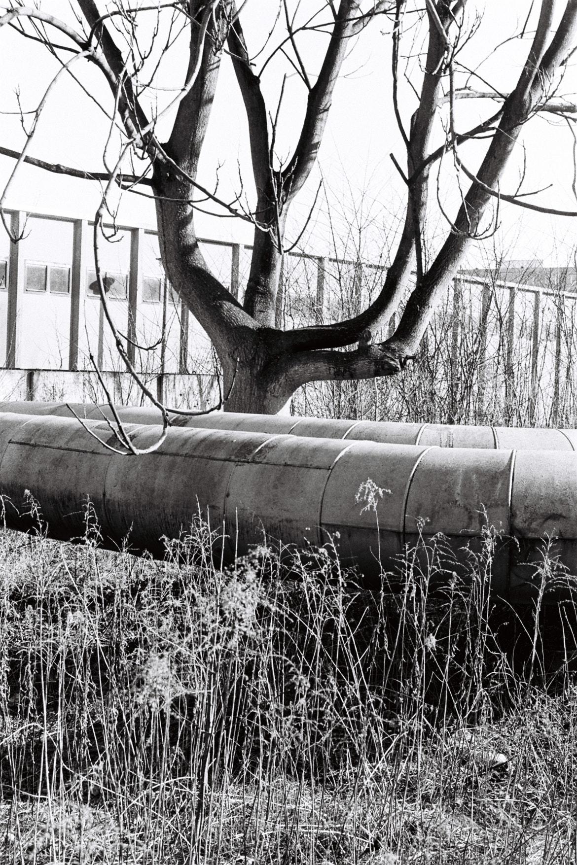 Photograph Berlin.Végétation.Plomberie by Oscar Hibou on 500px