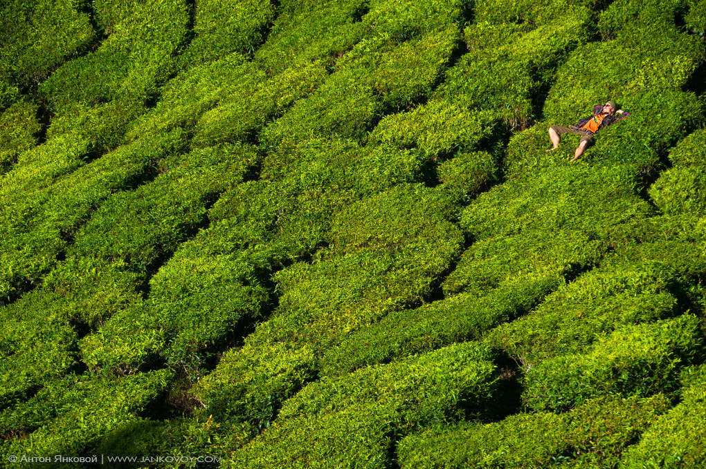 Photograph  Sun is shining, tea is green :)  by Anton Jankovoy on 500px