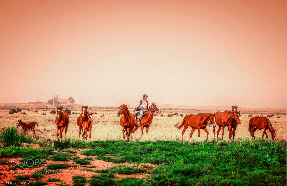 Photograph Herdsman & Crazy Horses by Yousif Aziz on 500px