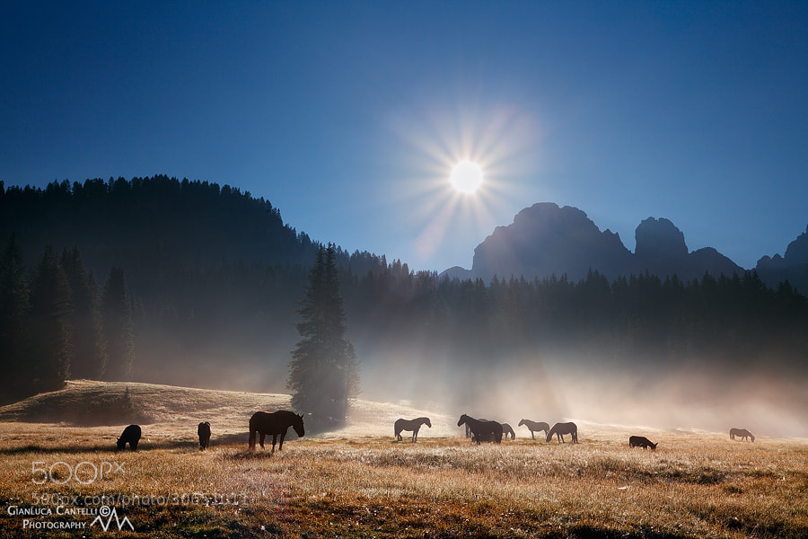 Photograph Into The Wild by Gianluca Cantelli on 500px