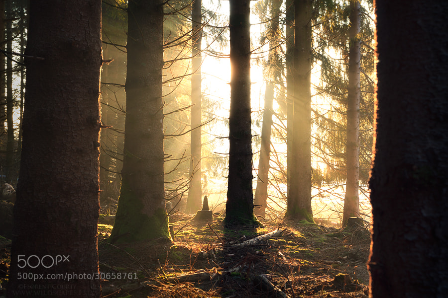 Photograph Morning Magic by Florent Courty on 500px