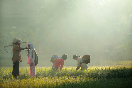 morning activity by dewan irawan