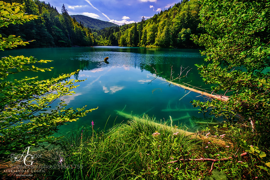 Tranquillity in the remote cove of the Prošćansko Jezero lake, the upper most of the Plitvice lakes, which is out of reach for the 1 million annual visitors of the park