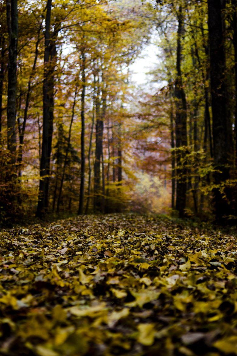 Photograph Forest 1 by Christoph Hilleberg on 500px