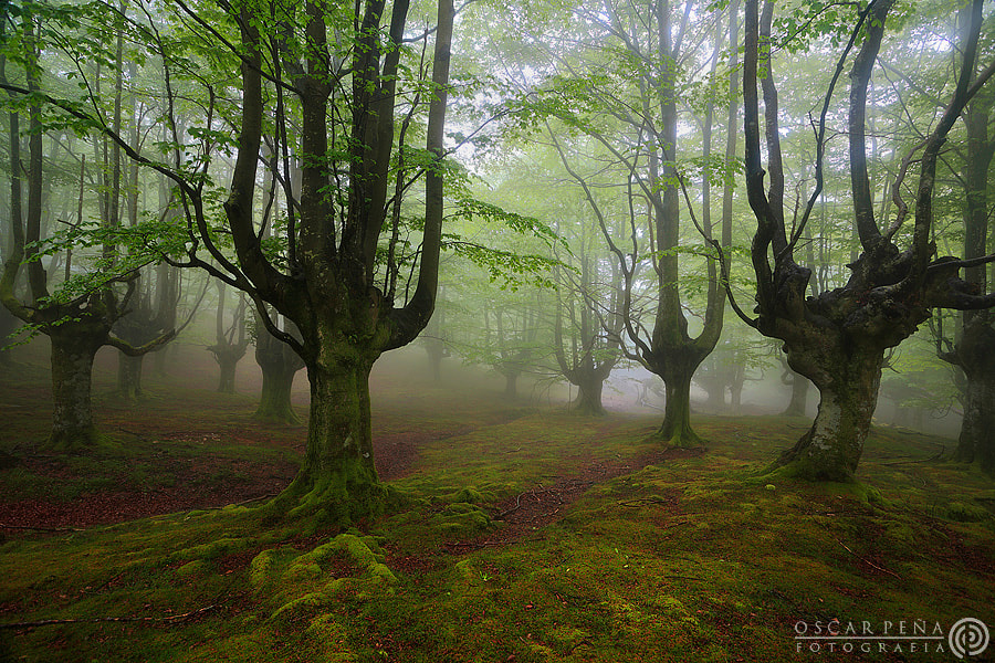 Photograph - spring forest - by Oscar  Peña on 500px