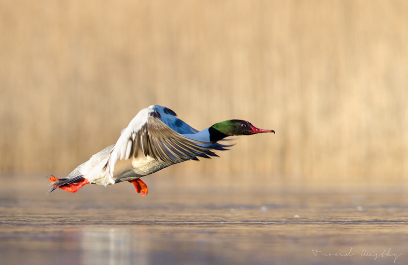 Photograph Take-off by Trond  Westby on 500px