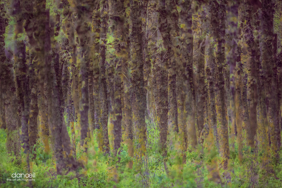 Photograph FOREST by Danielle Kassouf on 500px