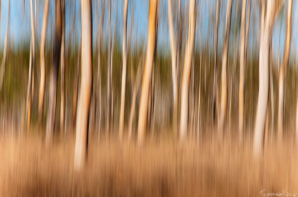 Photograph Into the Trees  by Tommaso Renzi on 500px