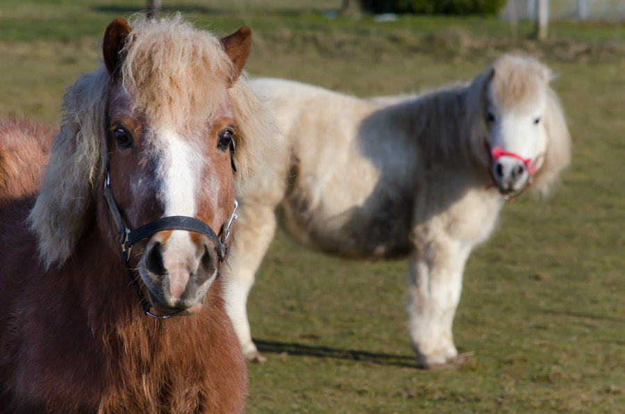 Photograph pony`s by Gunter Werner on 500px