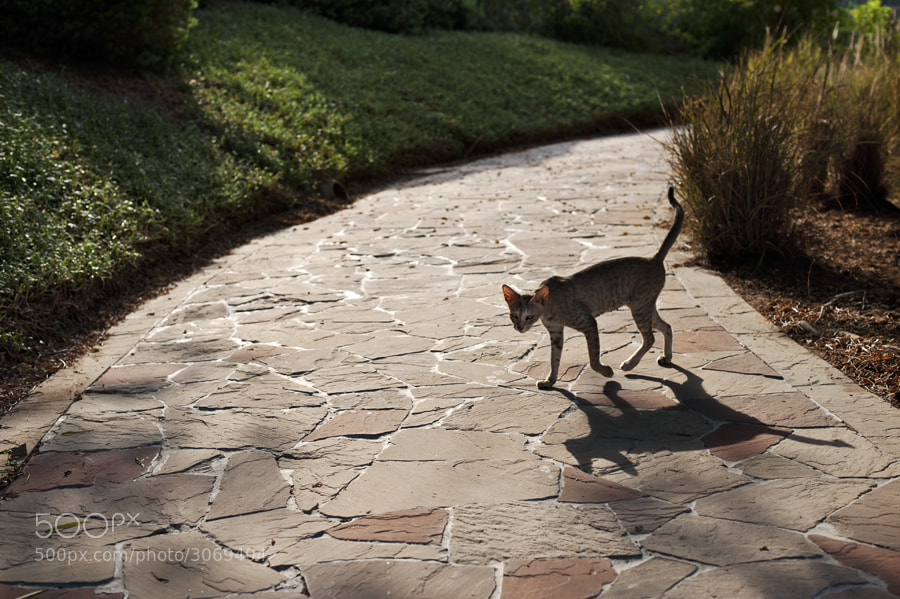 Photograph A cat that walks by itself by Nataliya Zemnaya on 500px