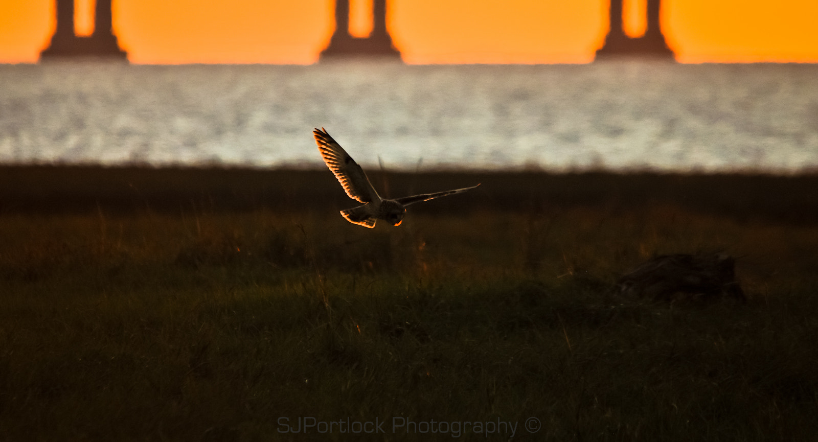 Photograph Short-eared Owl  by Stephen Portlock on 500px