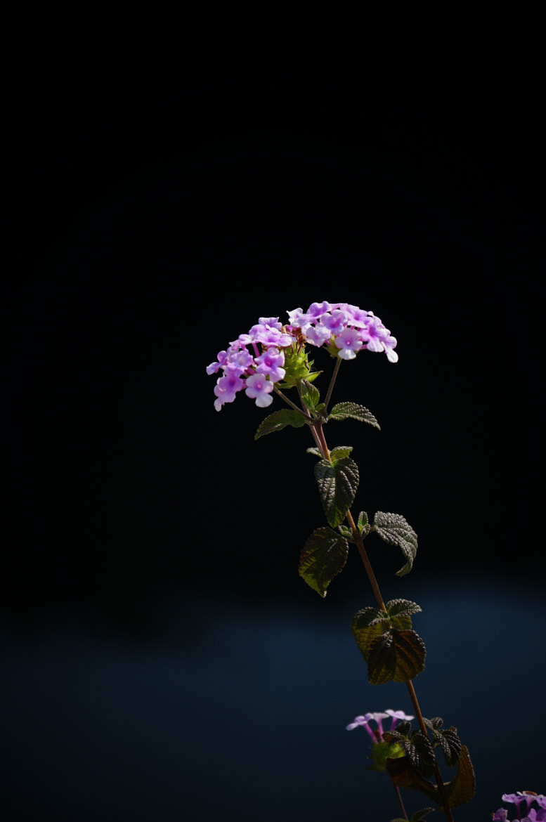 Photograph flower by march SYL on 500px