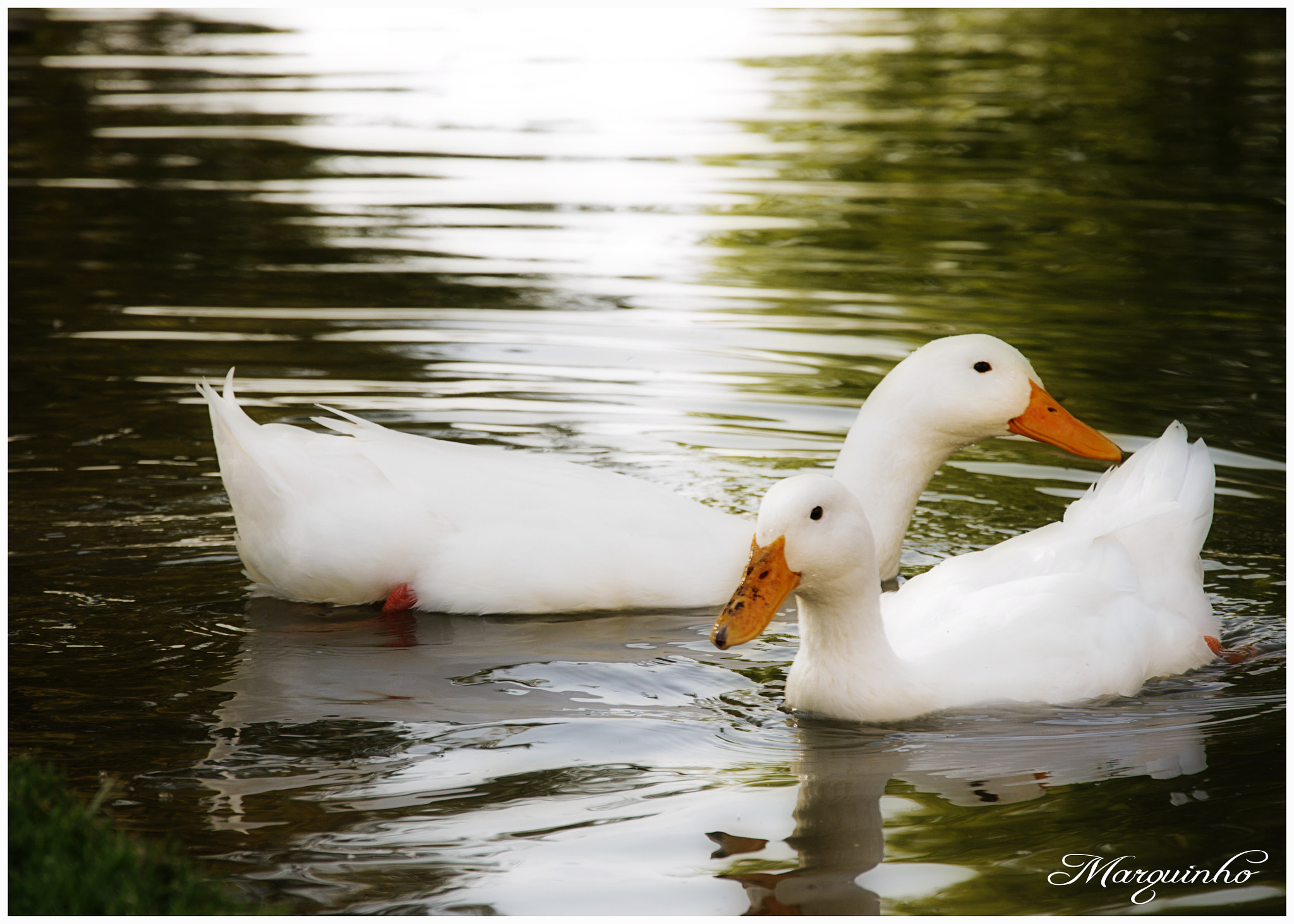 Photograph Couple by Marco Orozco on 500px