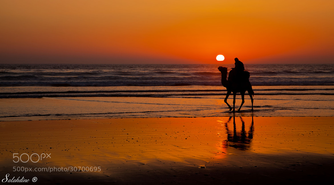 Photograph Camel Sunset From Agadir, Morocco by Snapshooter Salah on 500px