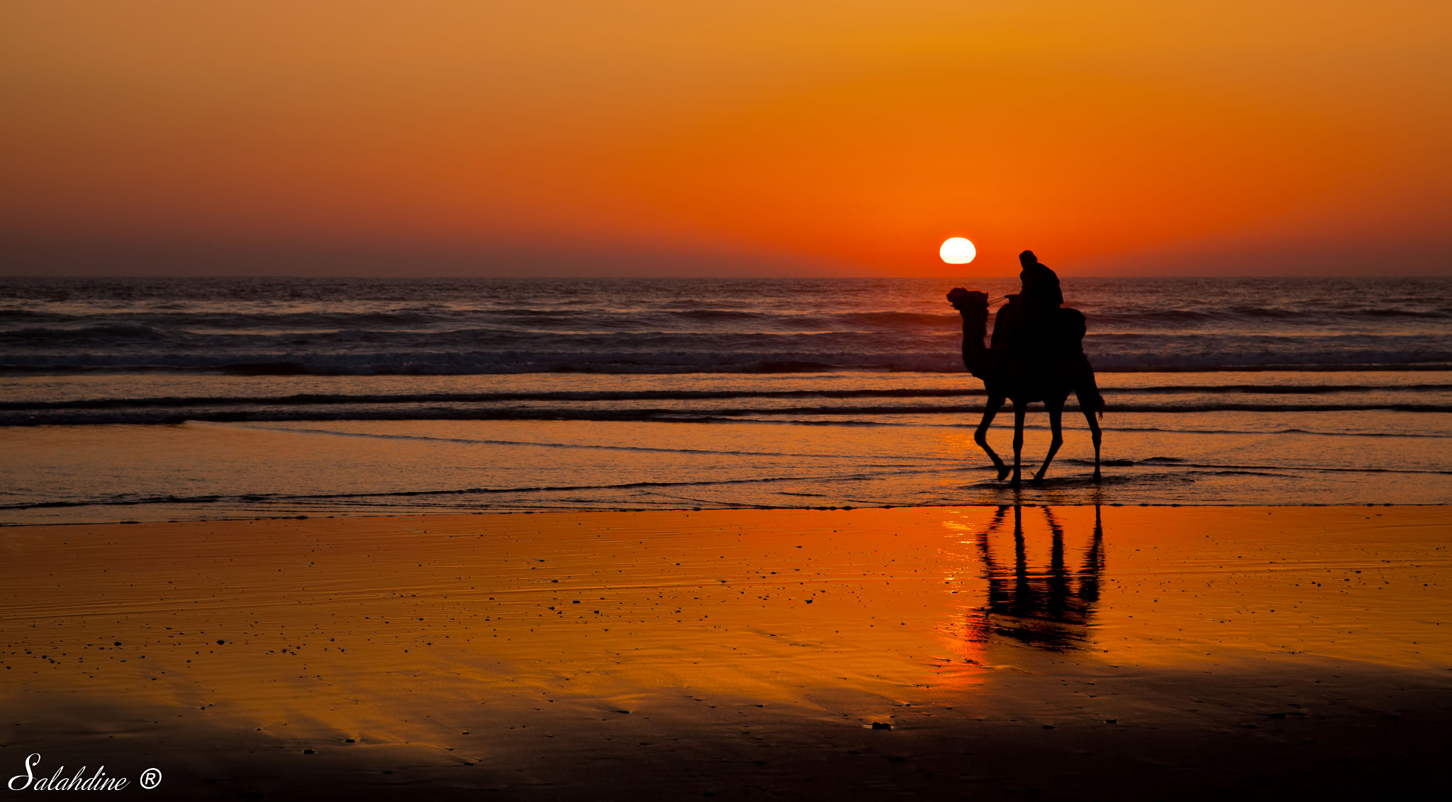Photograph Camel Sunset From Agadir, Morocco by Salah Capt on 500px