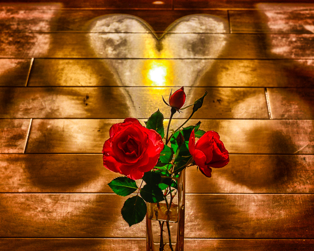 Photograph Heart & Roses - Happy Valentine's Day by Nerces Mavelian on 500px