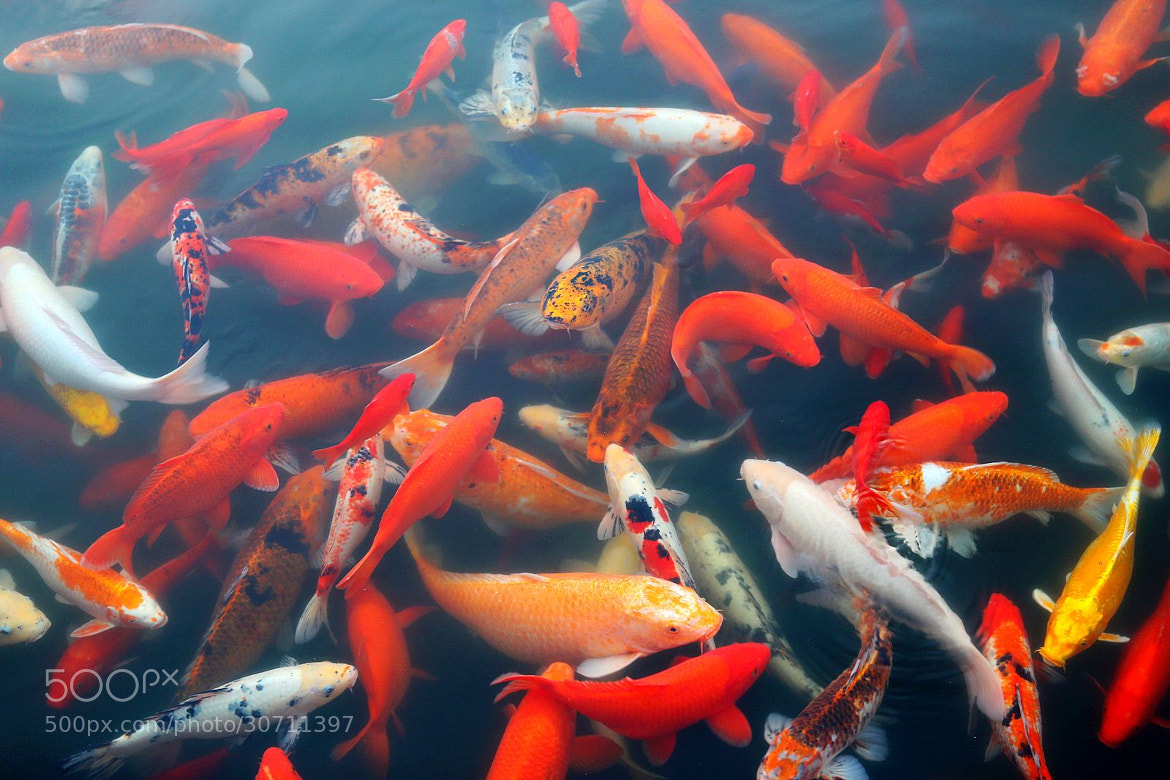 Photograph Fish by Ben Old Chen  on 500px