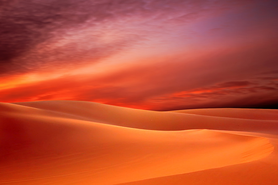 Photograph Desert Rose by Mostafa Ammar on 500px