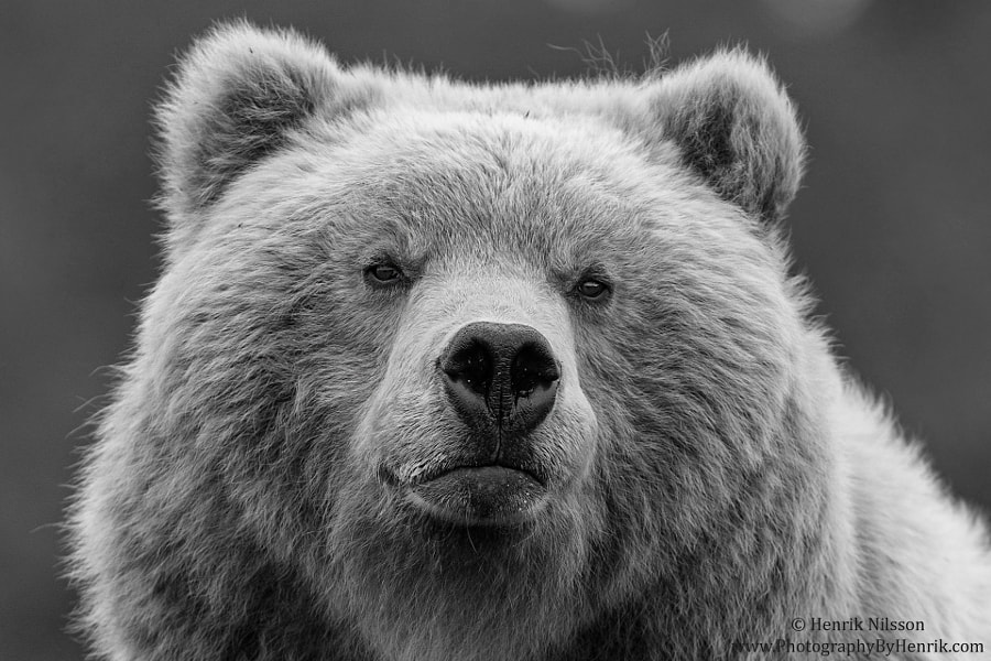 Big Lad by Henrik Nilsson on 500px.com