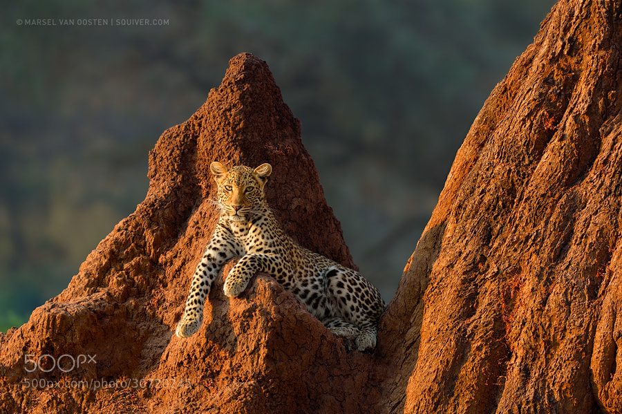 Photograph Miss Zambia by Marsel van Oosten on 500px