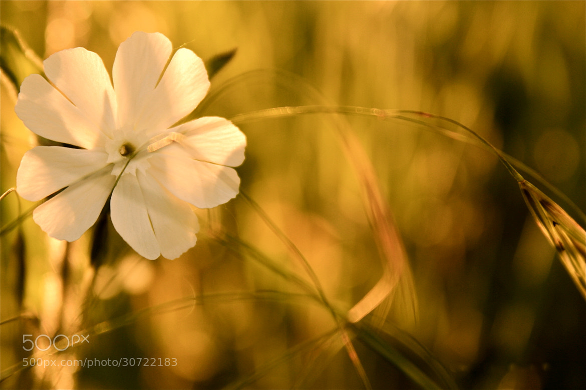 Photograph Tenderness  by Eo NaYa on 500px
