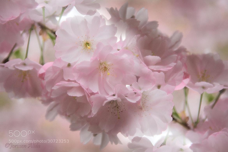 Photograph Pastel by Alida Jorissen on 500px