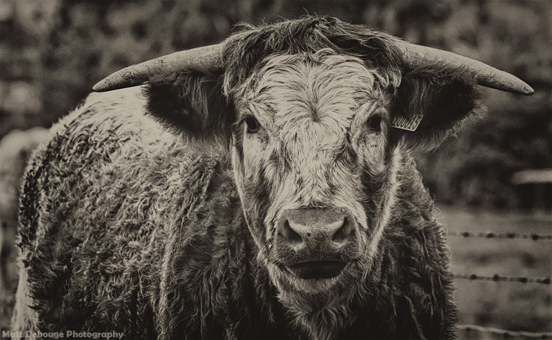 Photograph Moo by Matt Debouge on 500px