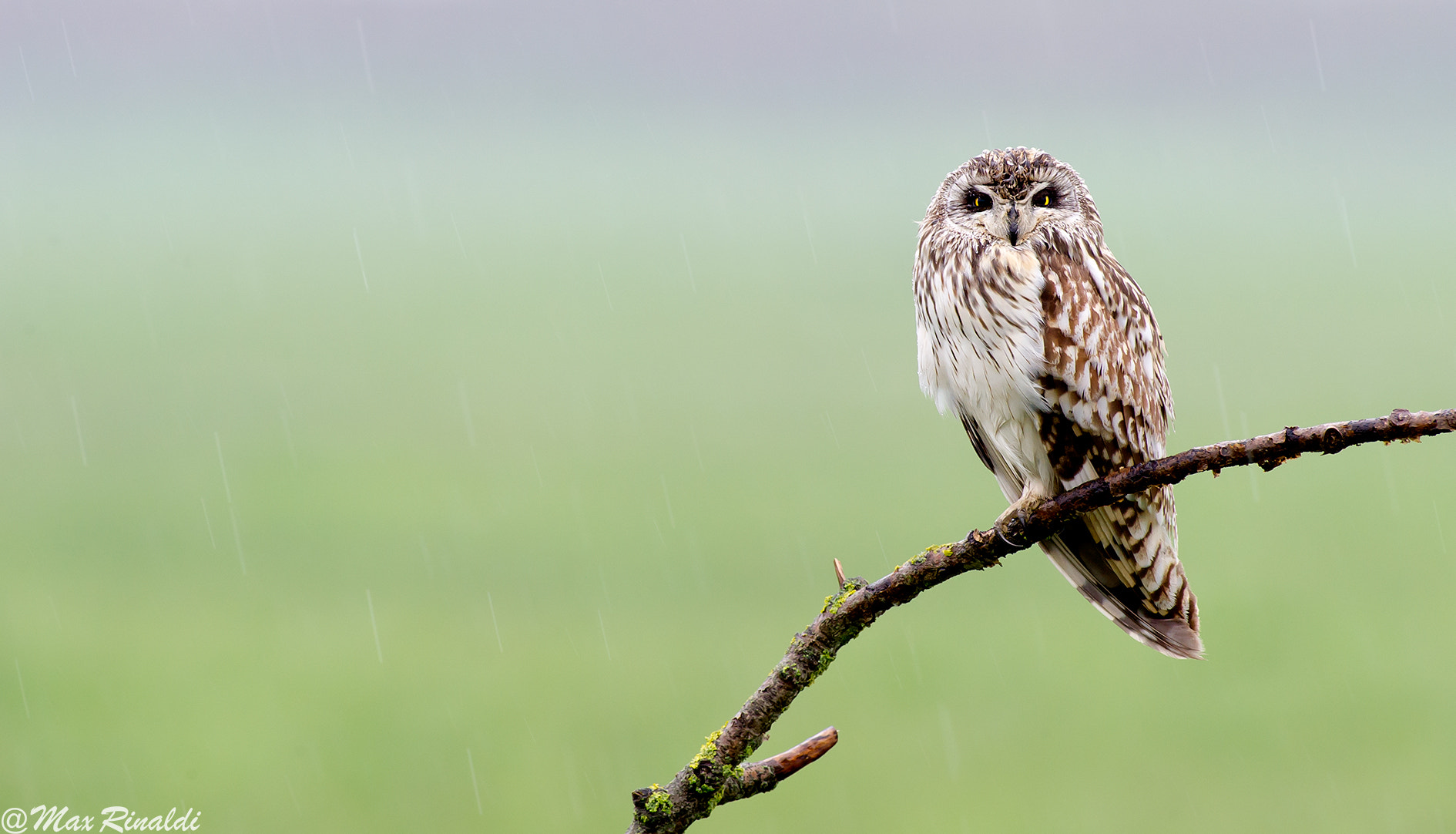 Photograph Under the Rain by Max Rinaldi on 500px