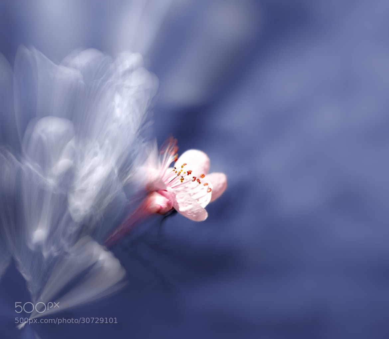 Photograph Born of Light by Josep Sumalla on 500px