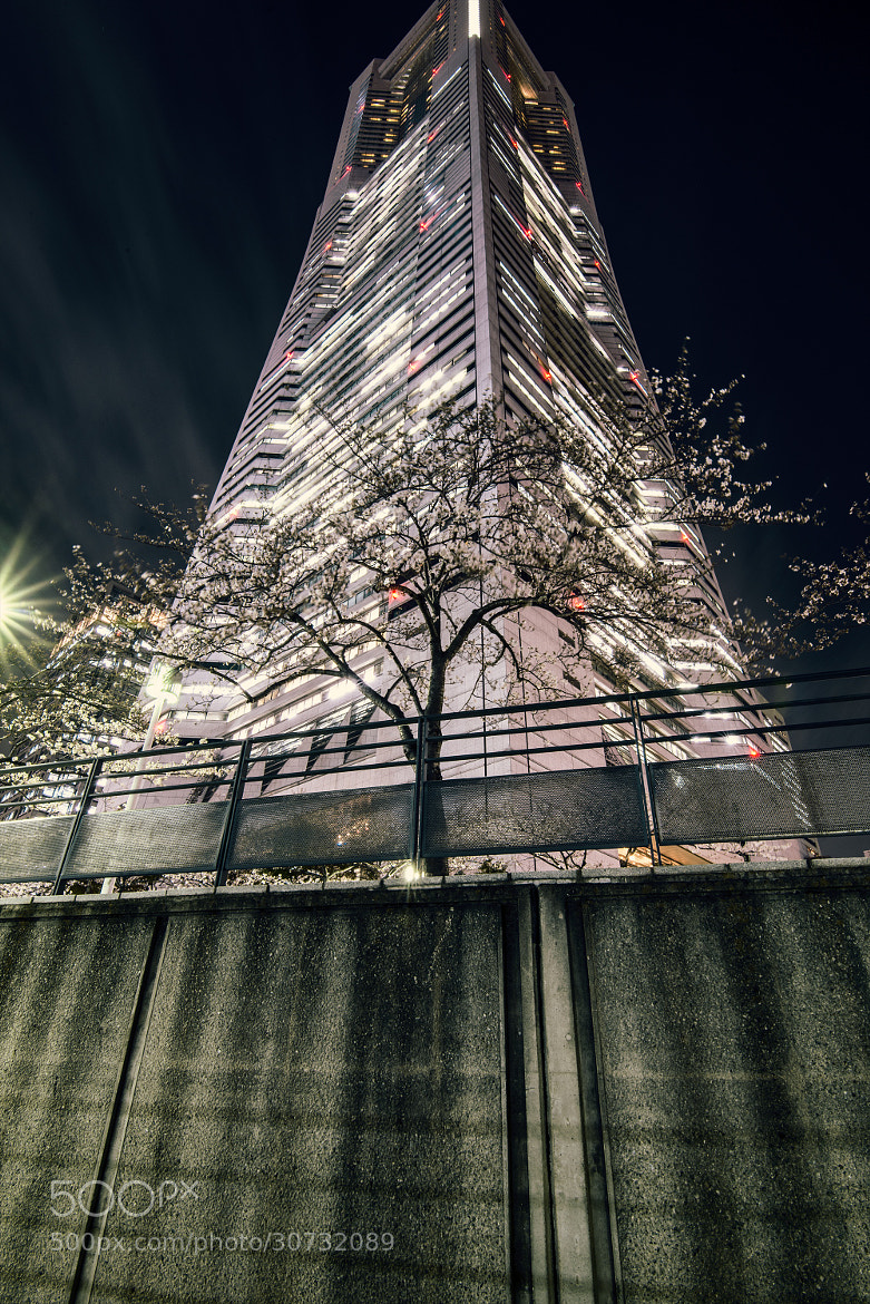 Photograph Sakura Skyscraper by hugh dornan on 500px
