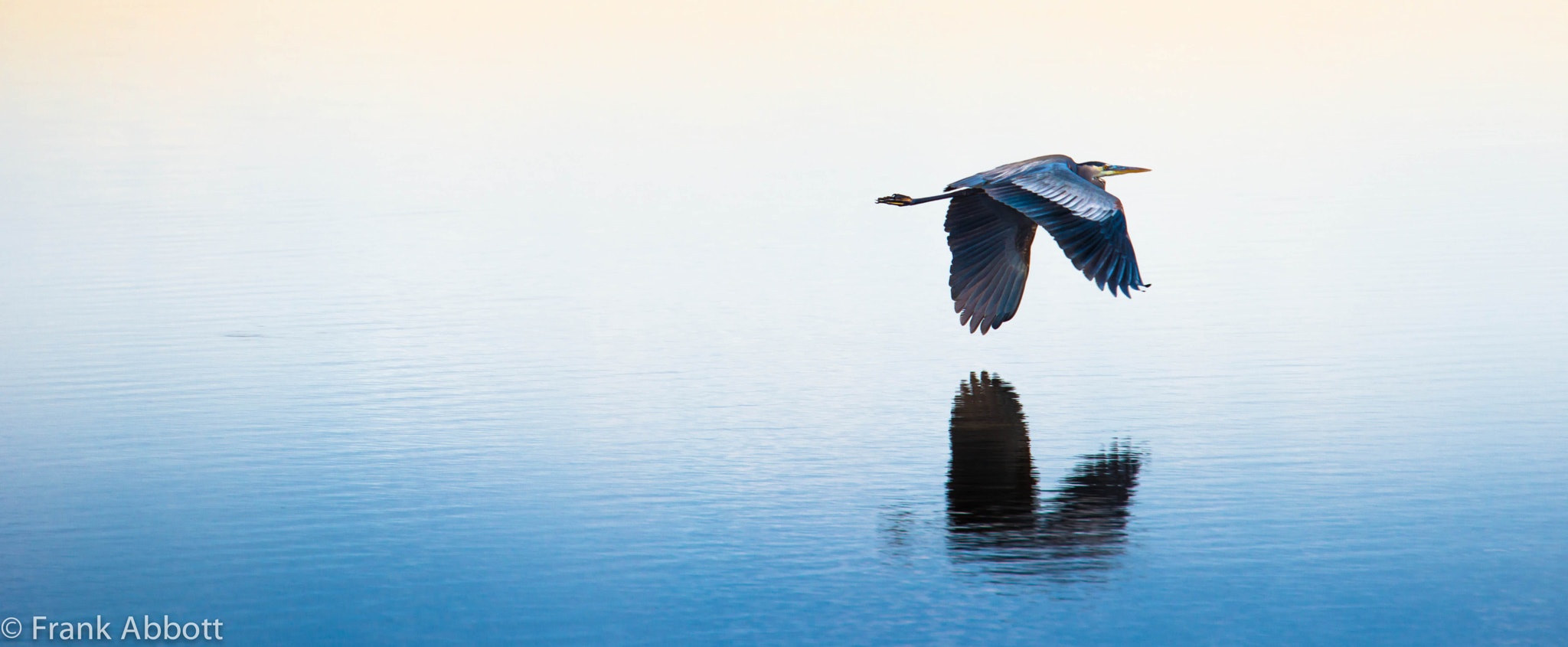 Photograph Great Blue by Franklin Abbott on 500px