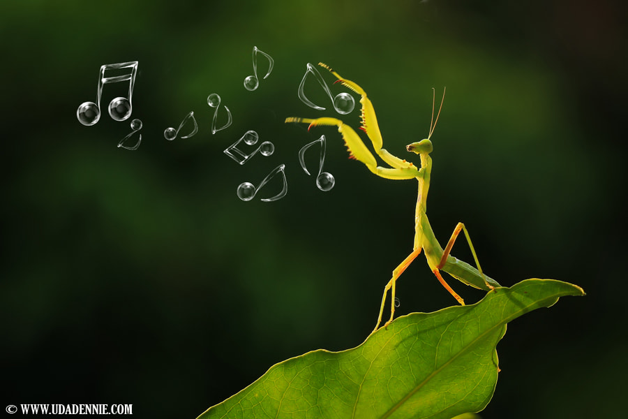 Photograph Nature's Orchestra by Uda Dennie on 500px