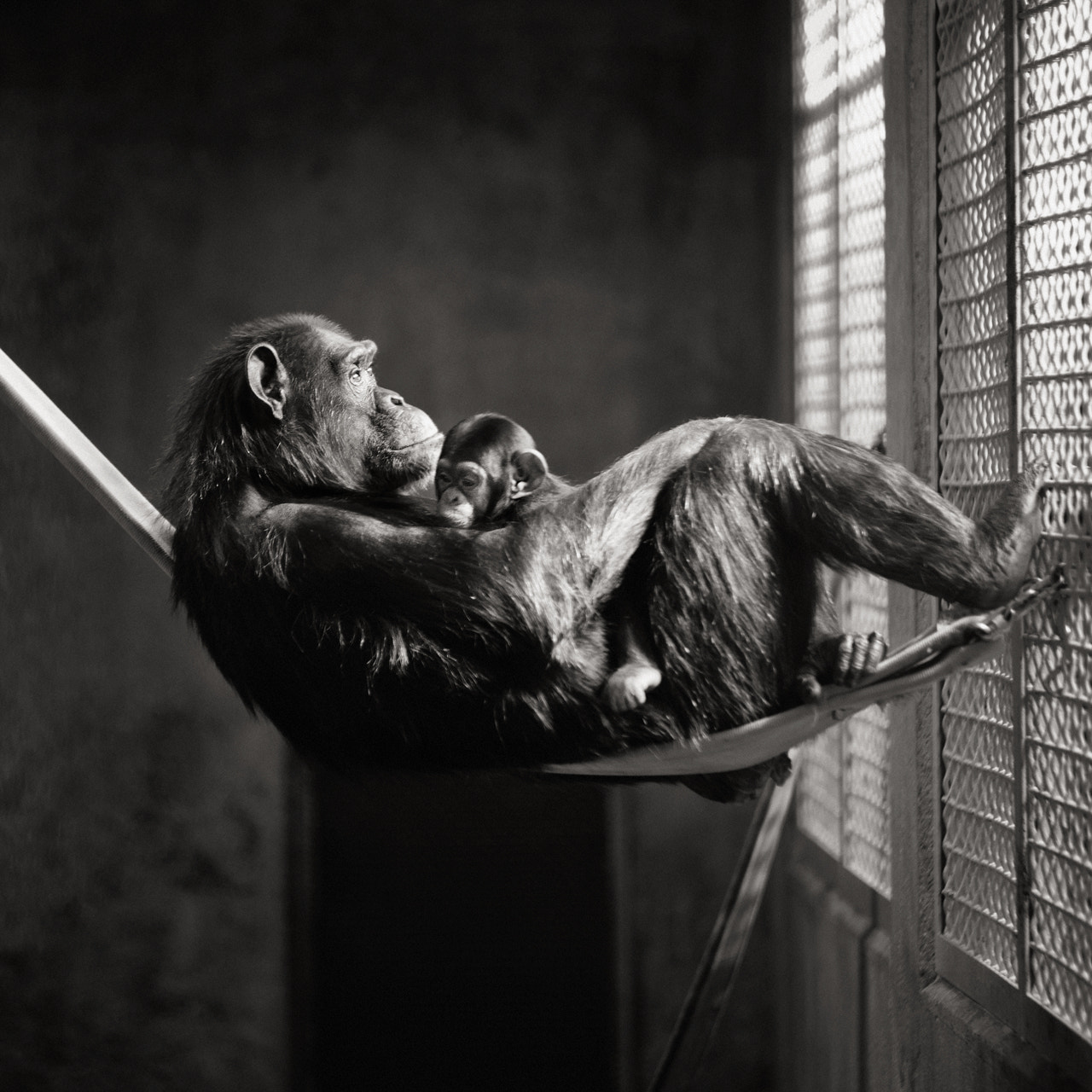 Photograph captivity. by Brian Day on 500px