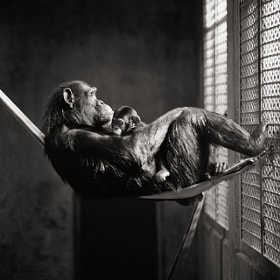 captivity. by Brian Day (brianday)) on 500px.com