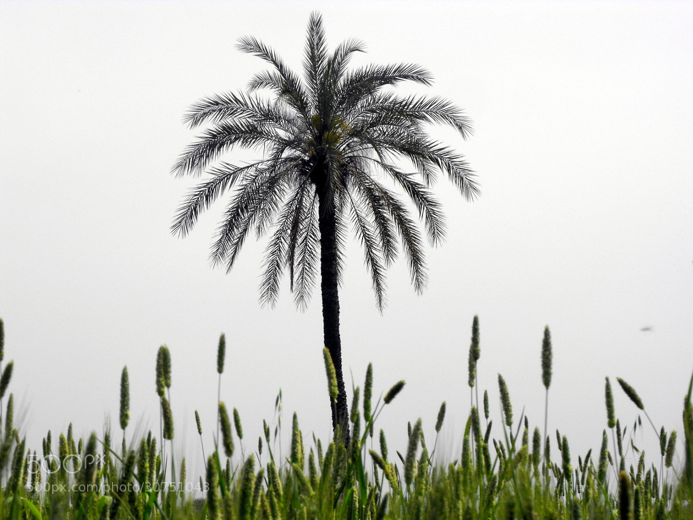 Photograph date in barley fields :) by Mahmoud Akbar on 500px