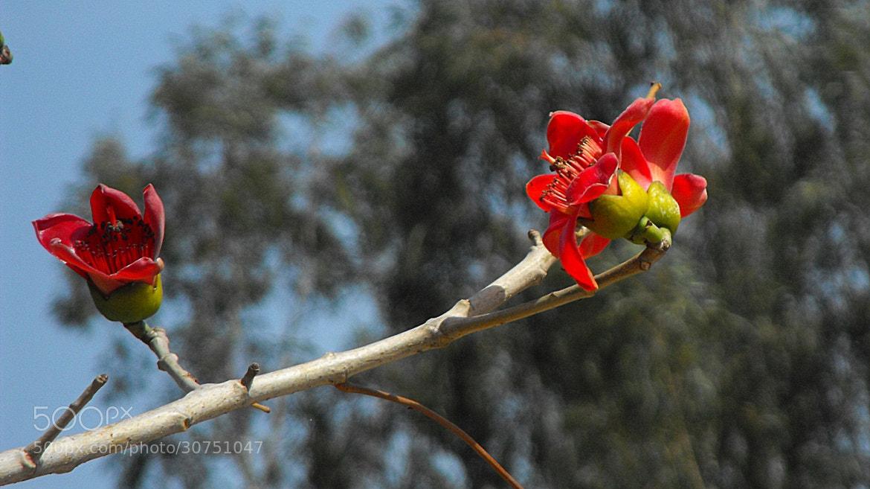 Photograph Sumbal flower by Mahmoud Akbar on 500px