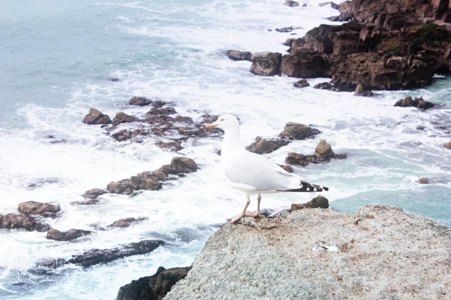 Seagull by Enako (Enako)) on 500px.com