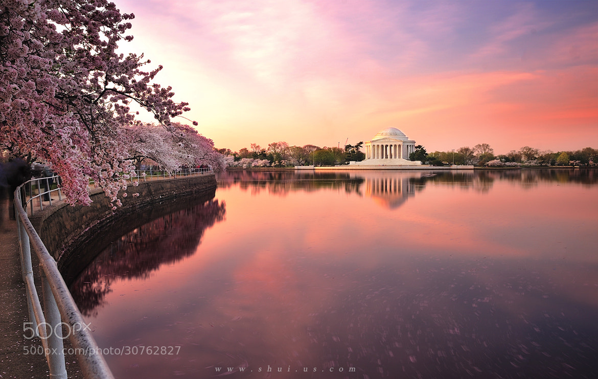 Photograph Cherry Blossom by Siyu Liu on 500px