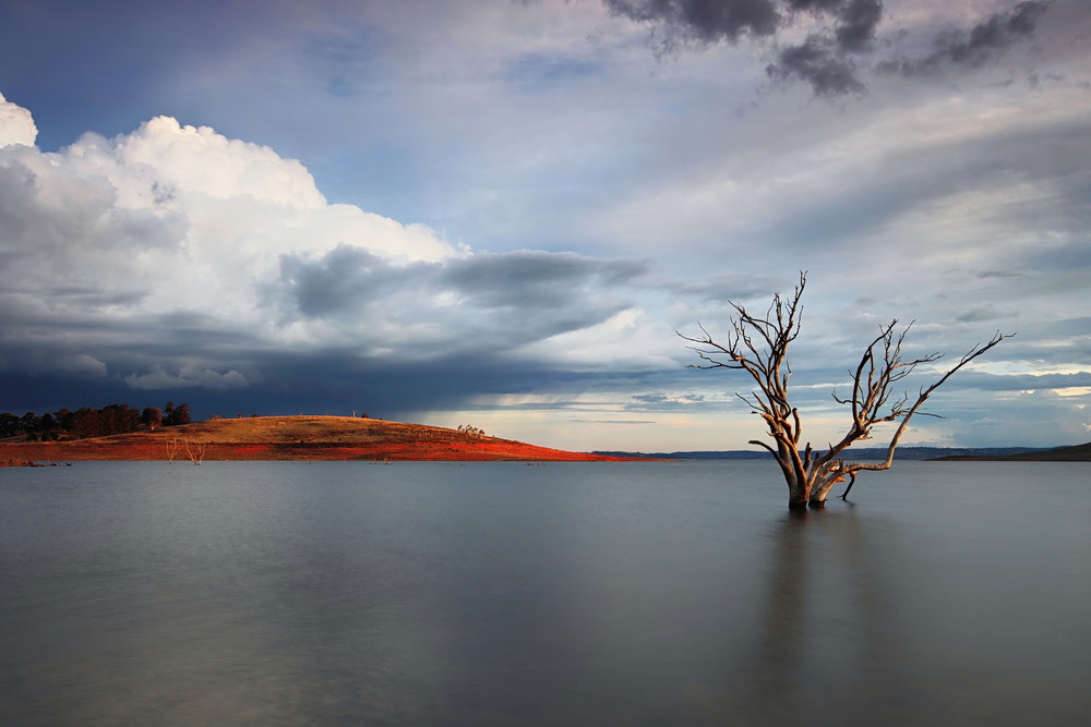 Photograph Adaminaby Tree by Tim Donnelly on 500px