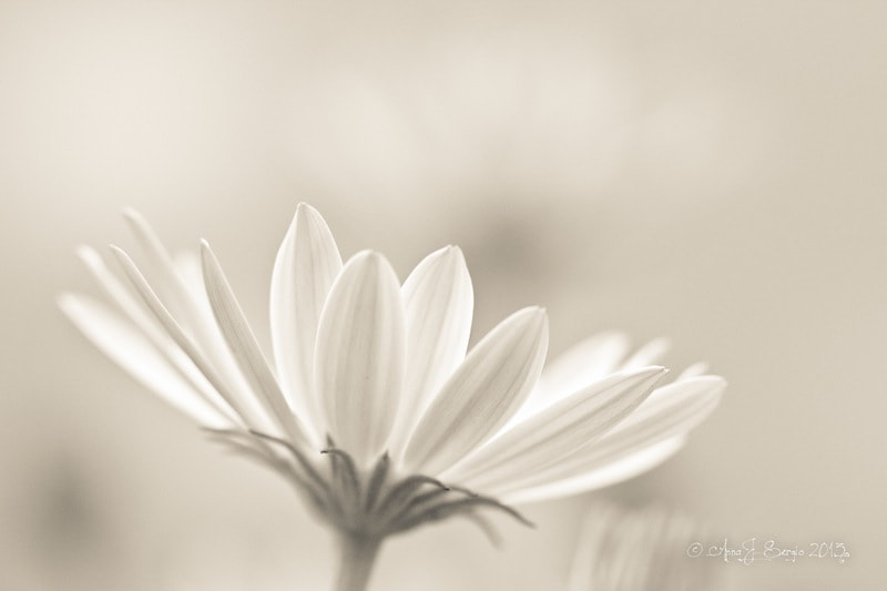 Spring Light by Anna  J Sergio on 500px.com