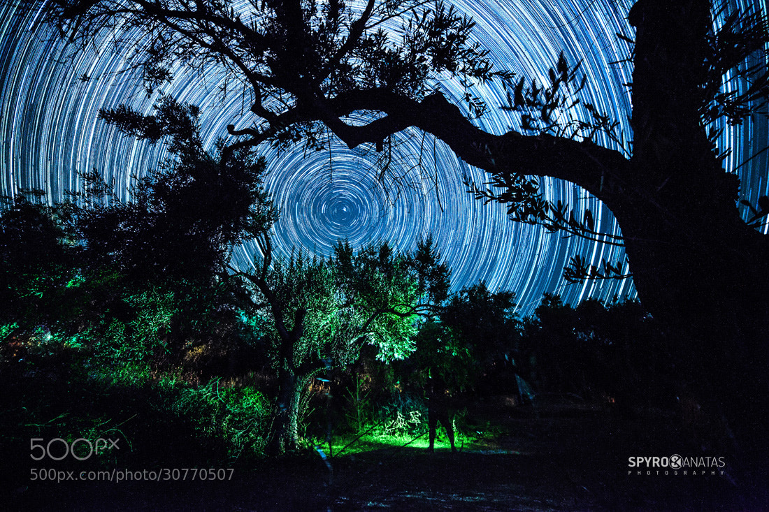 Photograph olive trees@midnight by spyros kanatas on 500px