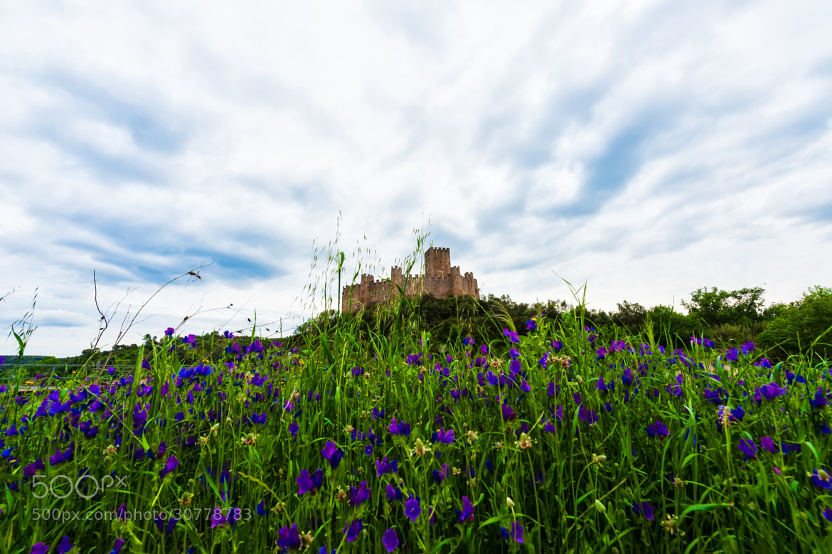 Photograph Spring is coming by Jorge Orfão on 500px