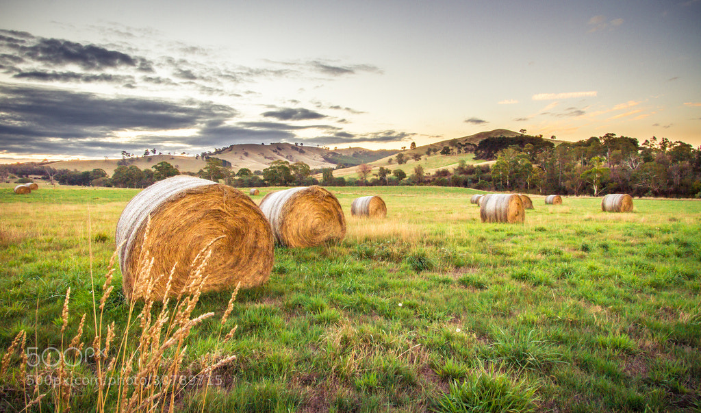 Photograph Grazing Sunset by Green Orchard Photography on 500px