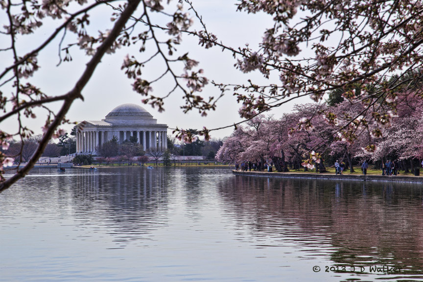 Photograph Thomas Jefferson Monument at Cherry Blossom Time by Jim Walker on 500px