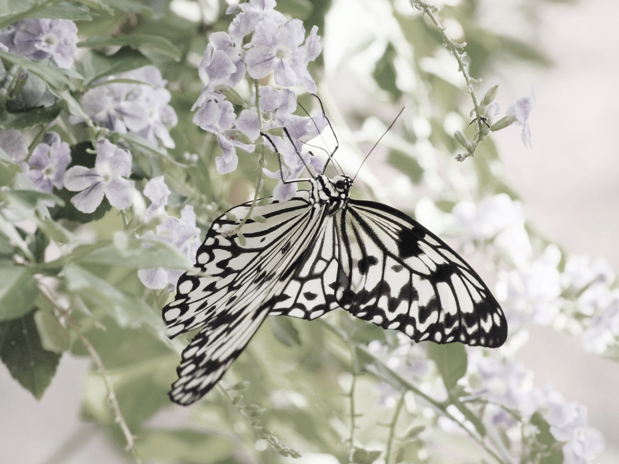 Photograph Butterfly Sublime by Aric Jaye on 500px