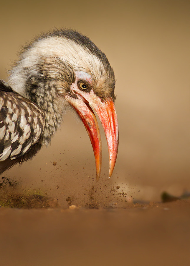 Photograph Hornbill Demolition by Lee Bothma on 500px