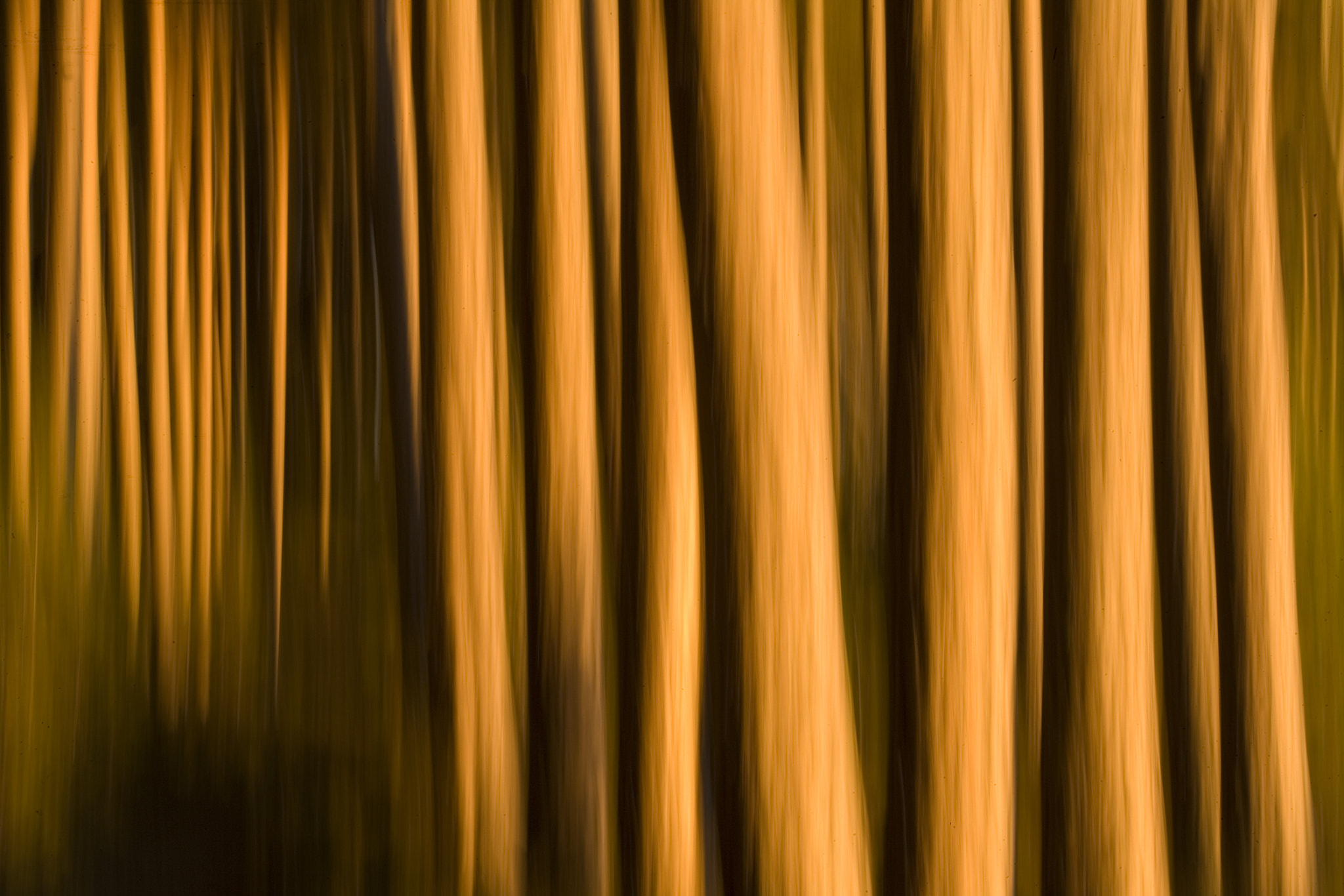 Photograph Abstract of pine forest by Peter Cairns on 500px