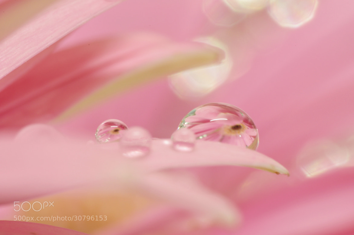 Photograph Flower reflection by YUYU Photography on 500px