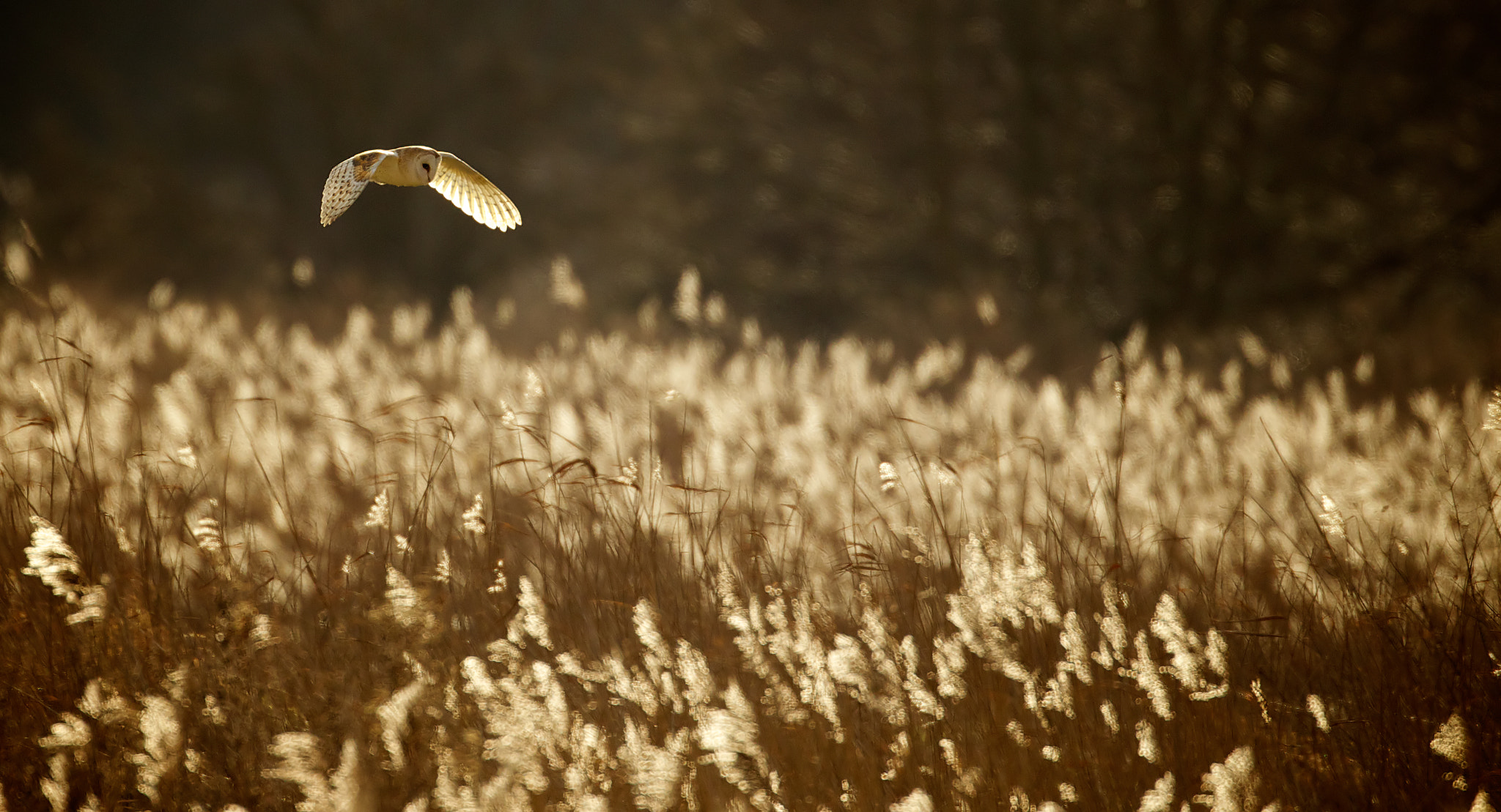 Photograph split tones by Mark Bridger on 500px
