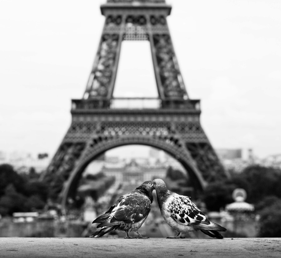 even pigeons feel it // paris by Pamela Ross on 500px.com